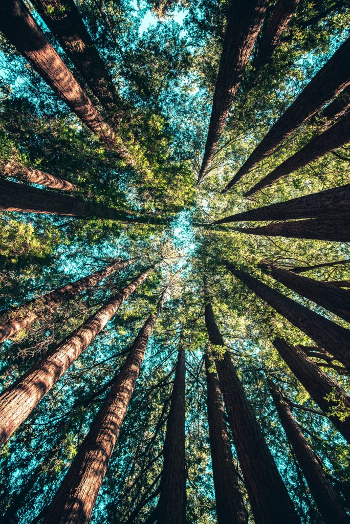 Planting Your Legacy Tree