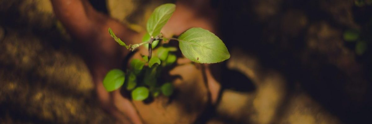 Why We Invest: Joyfully Planting Seeds for the Future